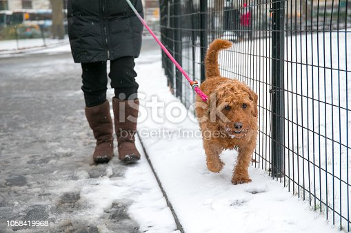 istock walking the dog in the park 1058419968