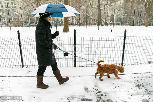 istock walking the dog in the park 1058419994