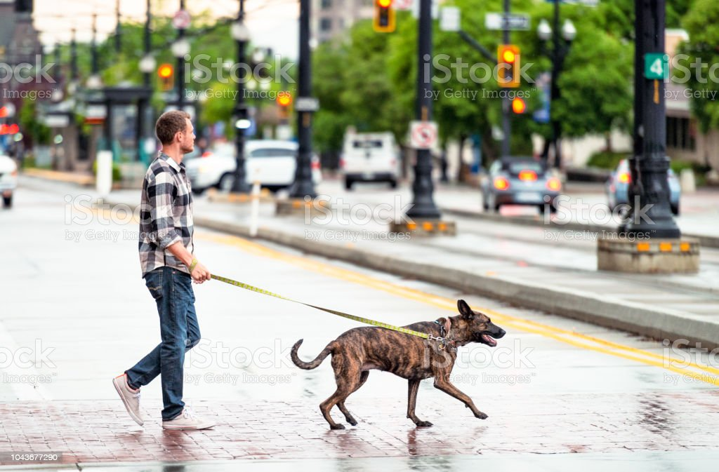 A young man crosses the street as he walks his rescue dog in Salt...