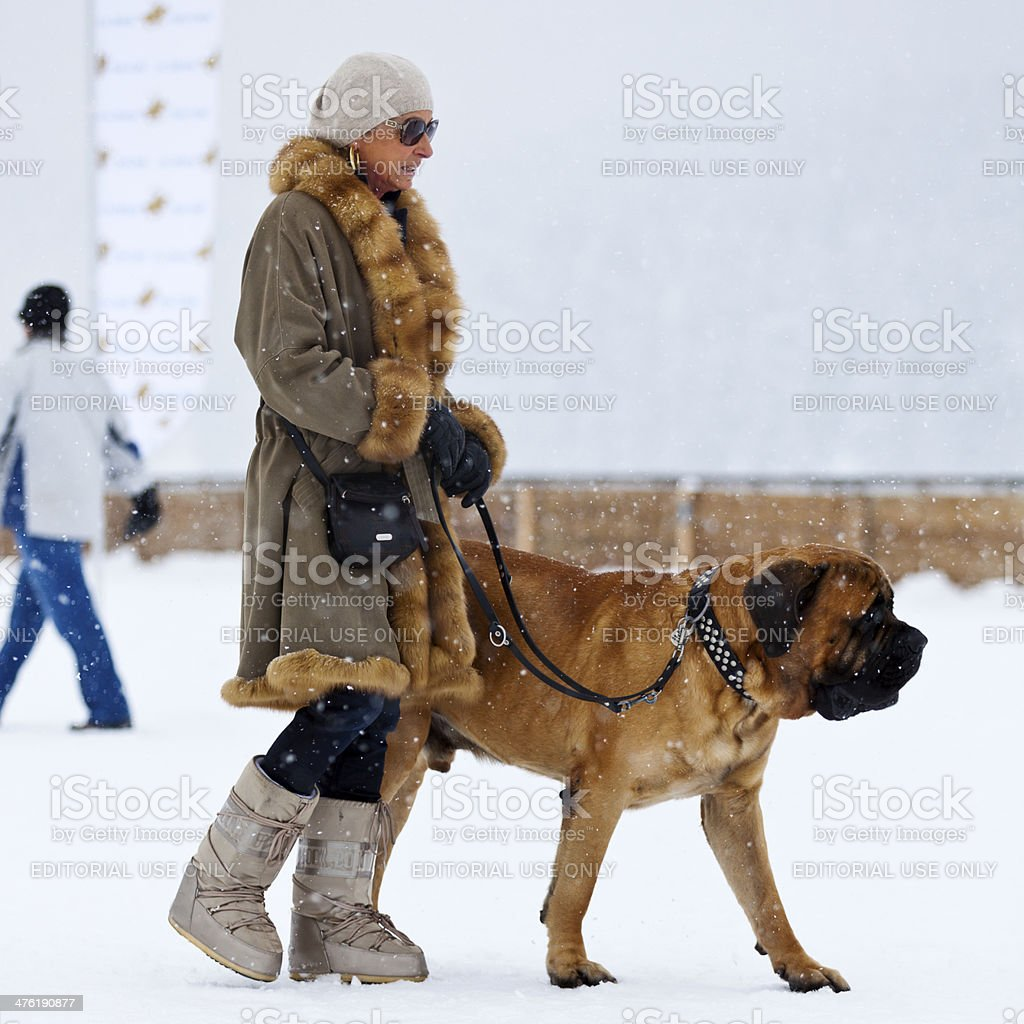 Walking the Dog royalty-free stock photo