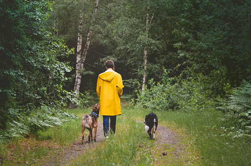 Walking the dogs in the Swedish woods