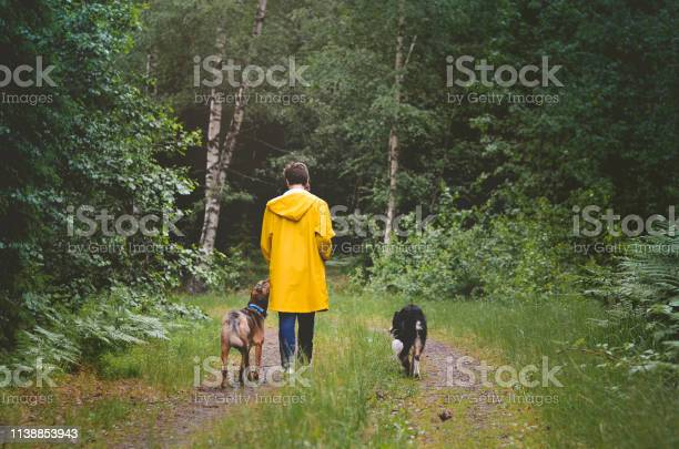 Walking the dogs in the swedish woods picture id1138853943?b=1&k=6&m=1138853943&s=612x612&h=nlctysrhqv r n77vhvvkprmcigtetyrsmkfhduktmw=