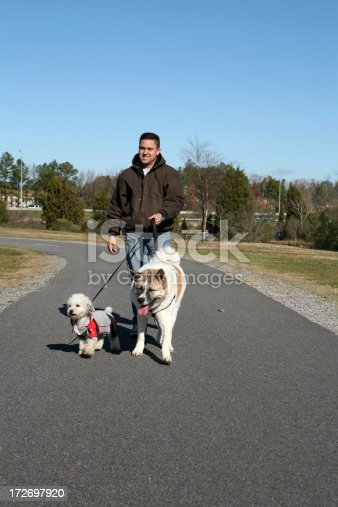 istock Walking the Dogs 172697920