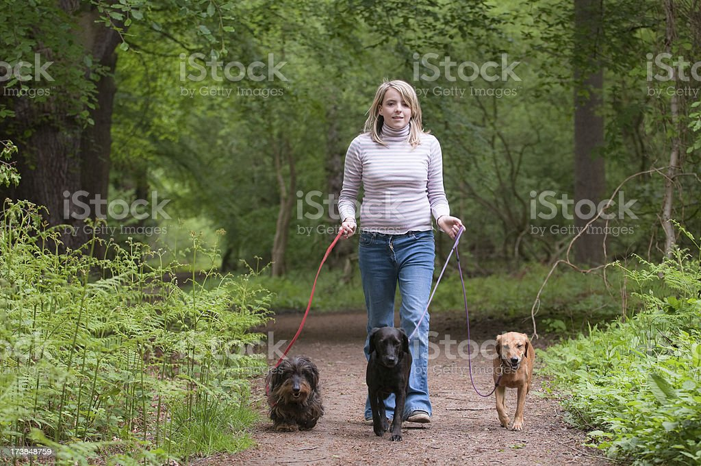 walking the dogs royalty-free stock photo