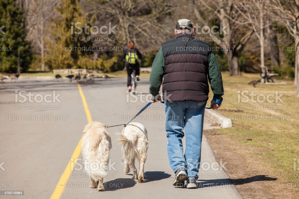 Man walking his dogs outdoors along the a paved trail near Spring...