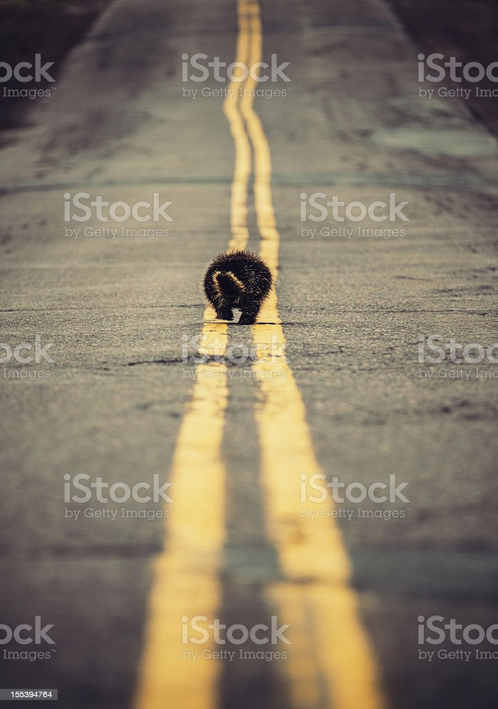 Walking the Line royalty-free stock photo