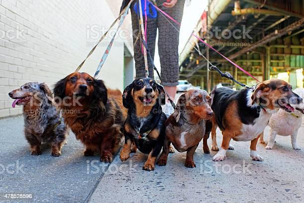 Walking the pack picture id478528596?b=1&k=6&m=478528596&s=612x612&h=b3mogdwvmszwxetqtire0d8qdawhxkvjjt6zarho la=