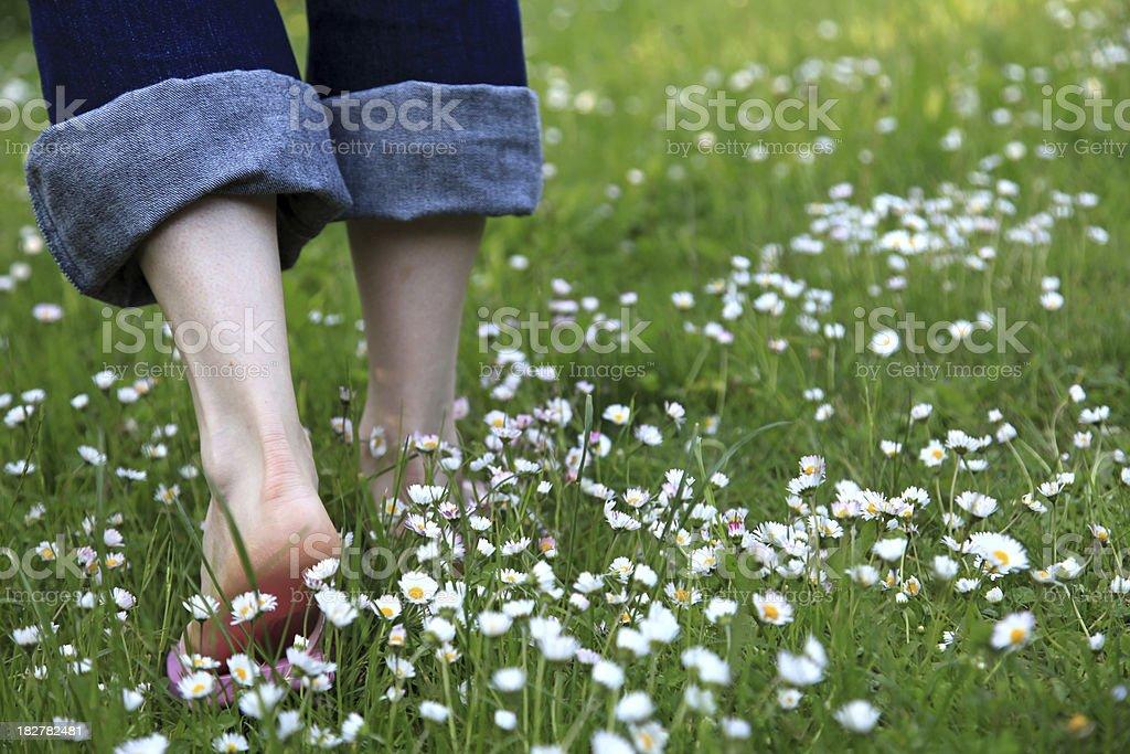 Walking through a daisy meadow stock photo