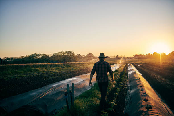Walking through his fields stock photo