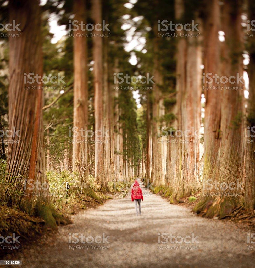 Walking through Shinshu forest royalty-free stock photo