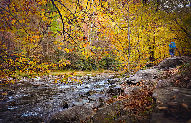 Walking through the woods in the fall A man at a distance walking through the woods with a stream to the left and beautiful yellow and orange colored trees all around. pigeon forge stock pictures, royalty-free photos & images