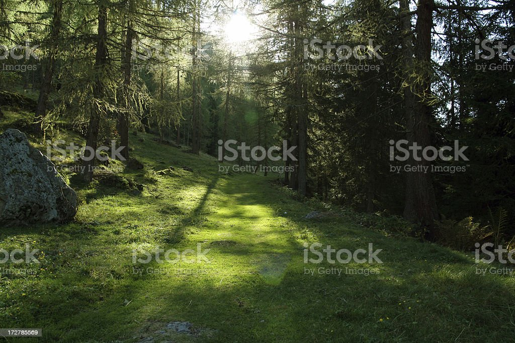 walking throught the woods royalty-free stock photo