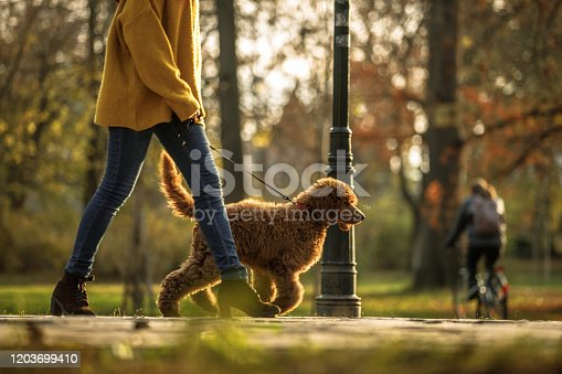 Low angle view of female animal trainer doing a training session of obedience with a red standard poodle in a public park.