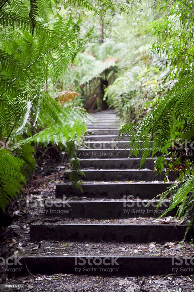 Walking to the falls royalty-free stock photo