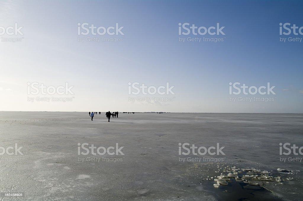 A los aburras acumularse sobre hielo foto de stock libre de derechos