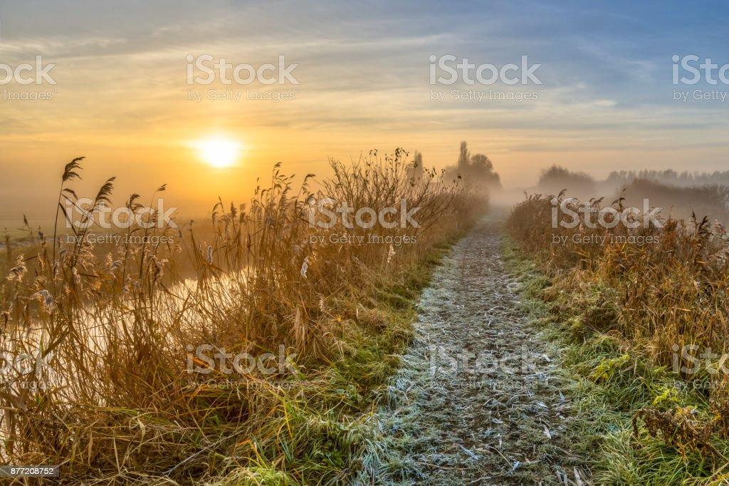 Walking track through reed stock photo