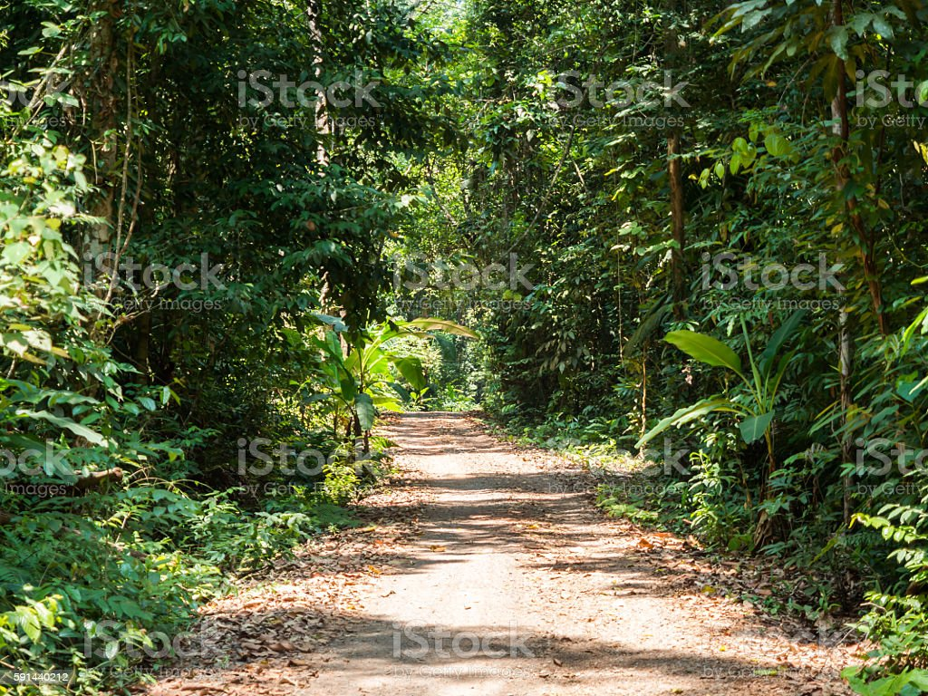 Walking trail in forest at Koh Kood stock photo