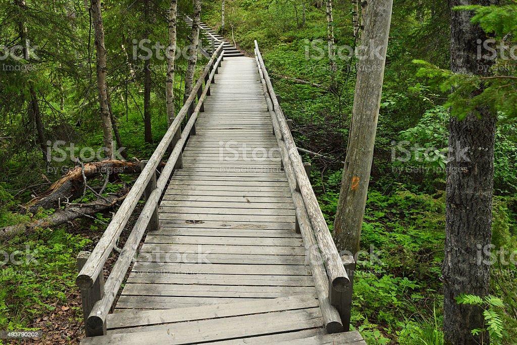 Walking trail in woods stock photo