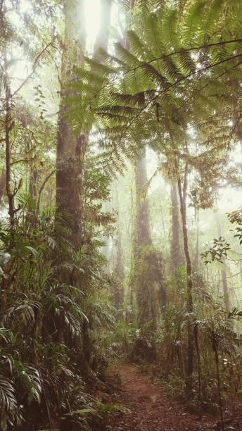 Walking trak in Misty Rainforest stock photo