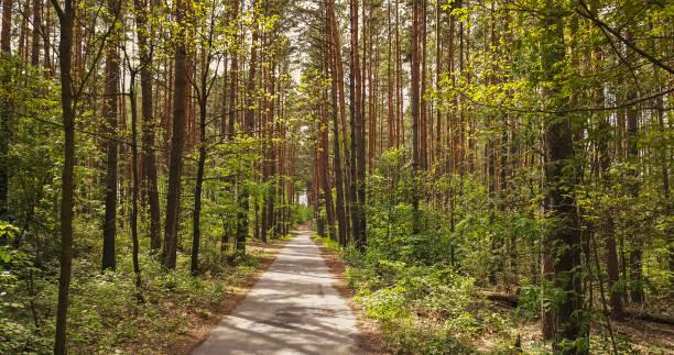 Walking way through the forest picture id1245021047?b=1&k=6&m=1245021047&s=612x612&w=0&h=k6wmxazn9oogpmzt9lwbqjnbfhvxju3fytaj090mxvy=