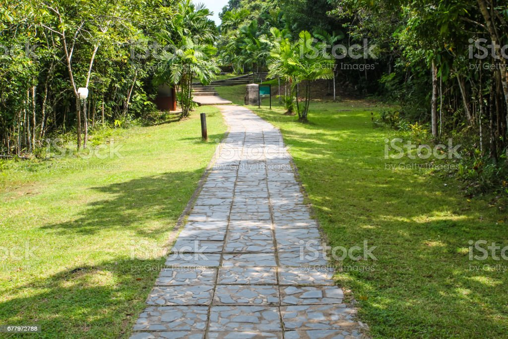 Walking way with tree and meadow in the public park royalty-free stock photo