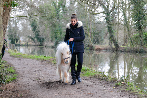 walking white maned palomino miniature shetland pony with russian outdoor girl - whiteway pony stock photos and pictures