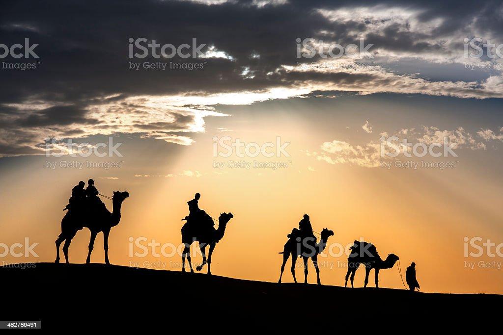 walking mit Kamel durch die Wüste Thar – Foto
