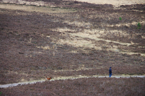 Walking with dog over the heathland