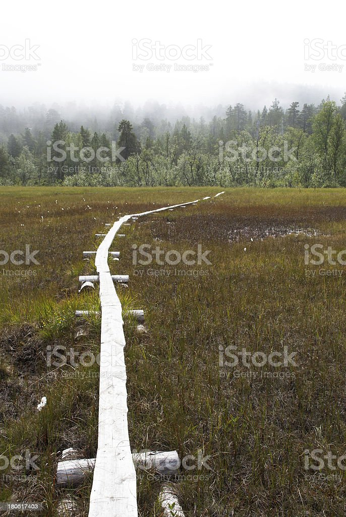 Walkingpath in the Moor royalty-free stock photo
