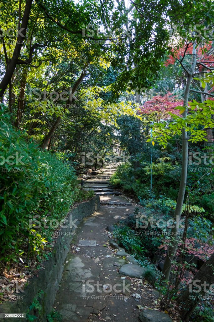 Walkpath and stone stairs in garden of Tokyo University. stock photo
