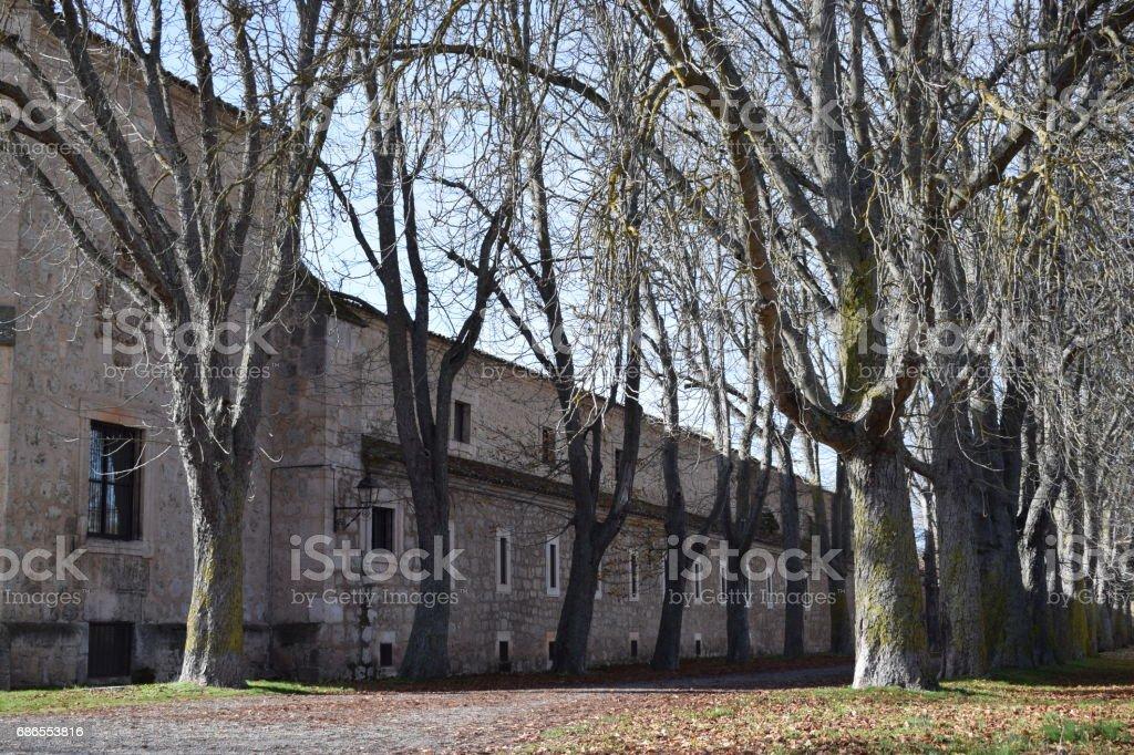 Paseos entre árboles sin hojas. foto de stock libre de derechos