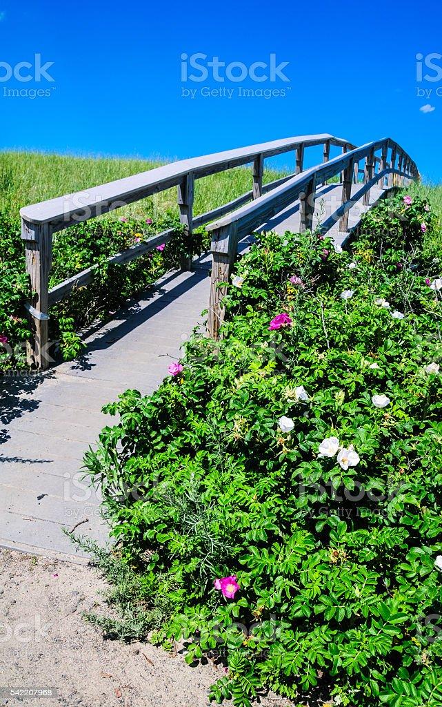 Walkway Across the Dune stock photo
