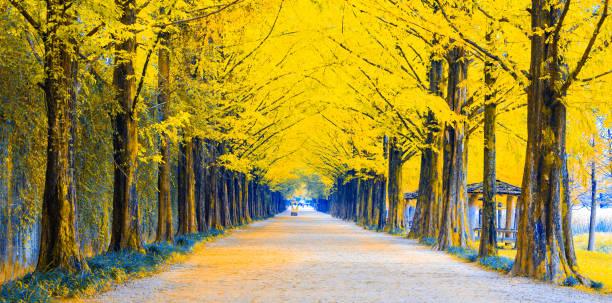 Gehweg zwischen Baumtunnel in der Herbstsaison, Südkorea oder Republik Korea – Foto