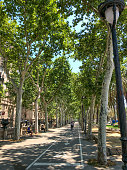 Barcelona, Spain - June 22 2018: A walkway and bike path run through an allee of Plane Trees, in the Passeig de Lluís Companys, Barcelona, Spain