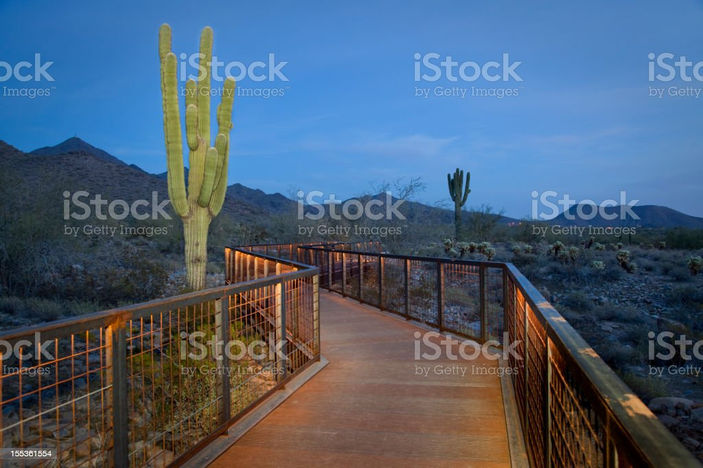 Walkway And Saguaro Painted With Light royalty-free stock photo