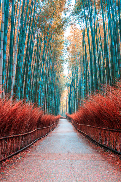 Gehweg Bambus Tunnel benannt Arashiyama Bambuswald in Kyoto, touristischen Wahrzeichen Japans – Foto