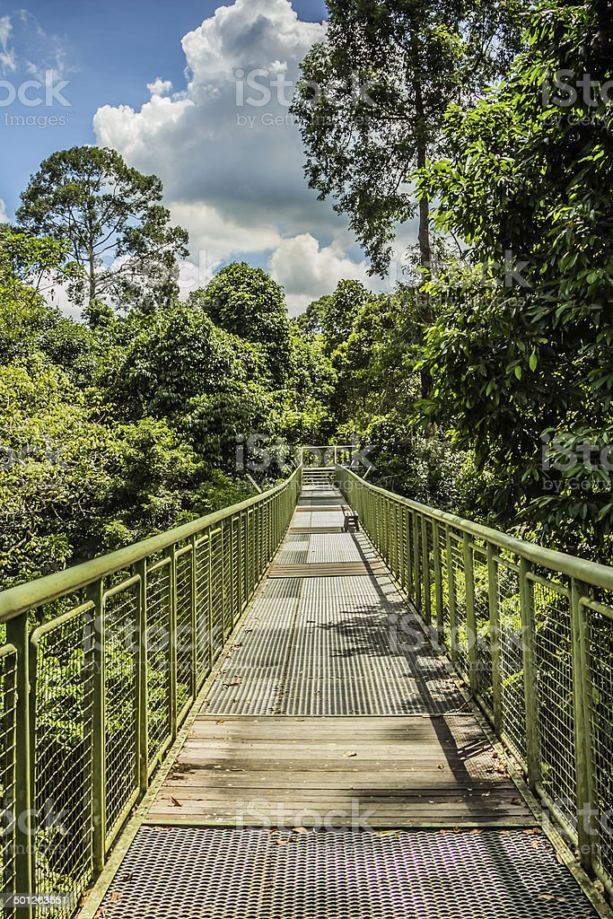 Walkway in the Borneo Jungle royalty-free stock photo