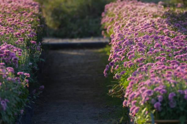 walkway in the flower garden stock photo