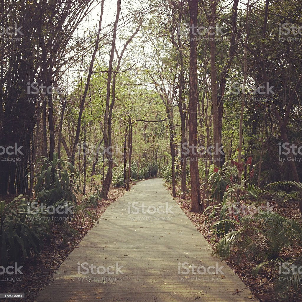 walkway in the forest royalty-free stock photo