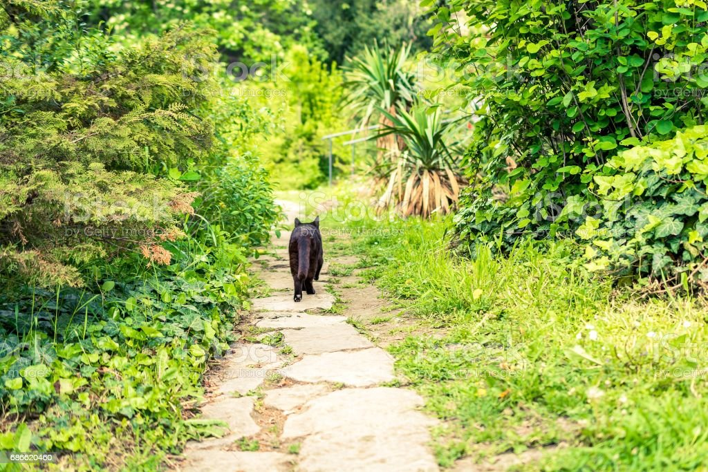 Walkway in the garden with cat walks along 免版稅 stock photo