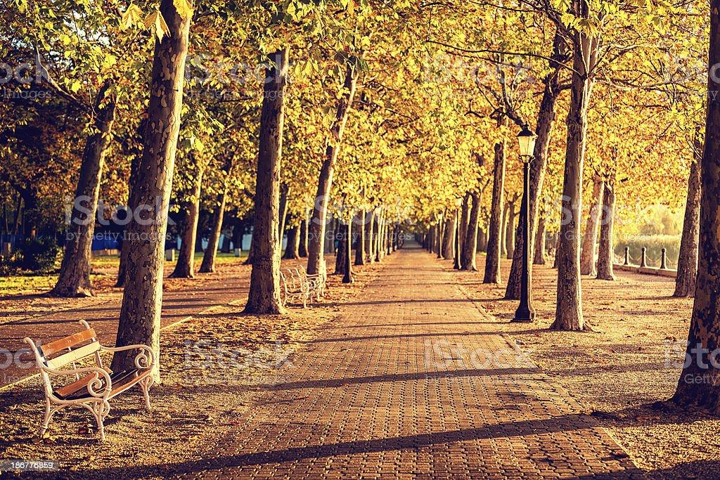 Walkway into the autumn royalty-free stock photo