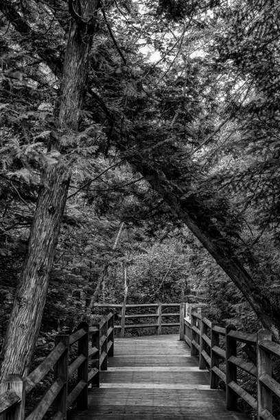 Walkway into the woods with a fallen tree stock photo