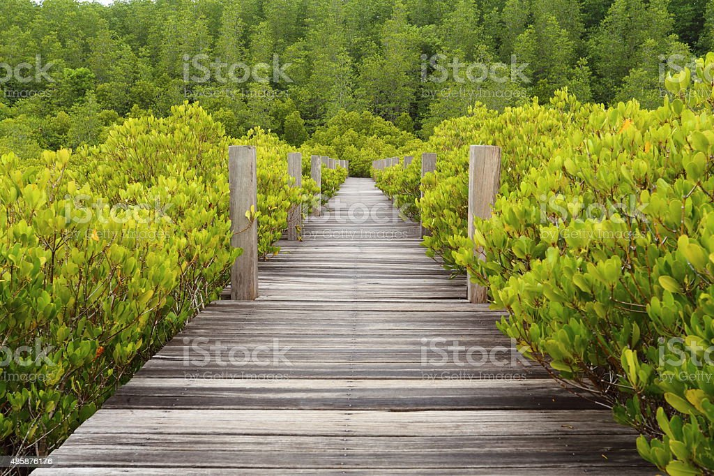 Walkway made from wood and mangrove field stock photo