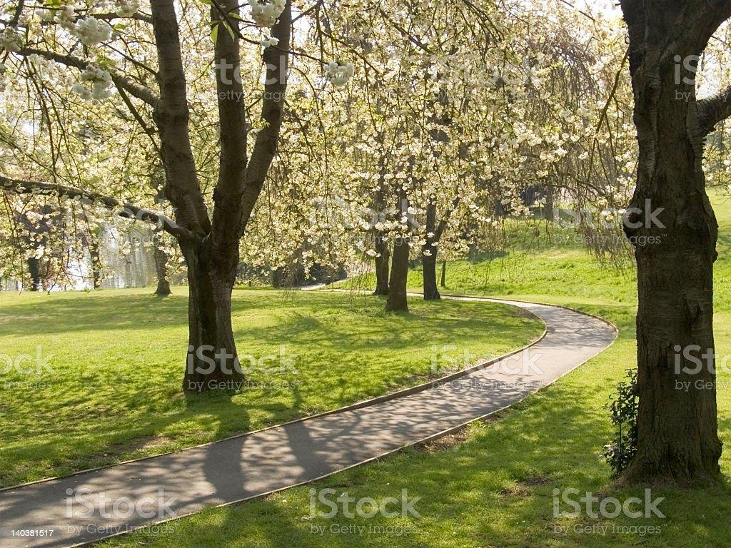 Walkway through a blooming garden stock photo