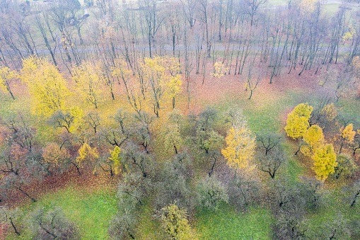 walkway through autumn park with colorful trees in foggy day. aerial view