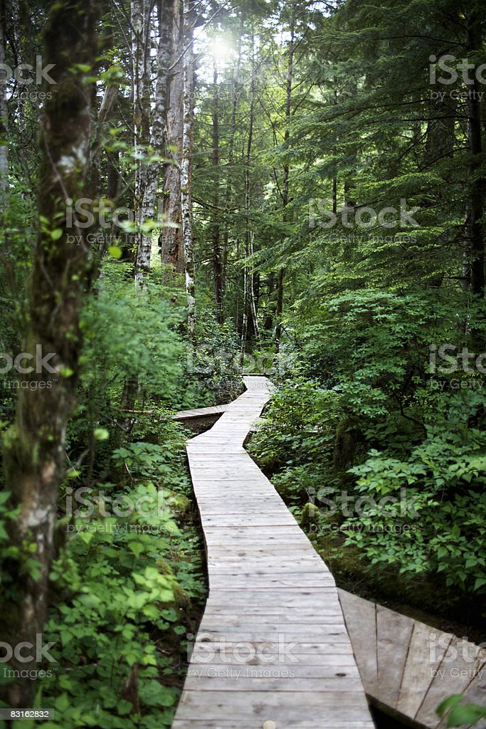 Walkway through forest. royalty free stockfoto