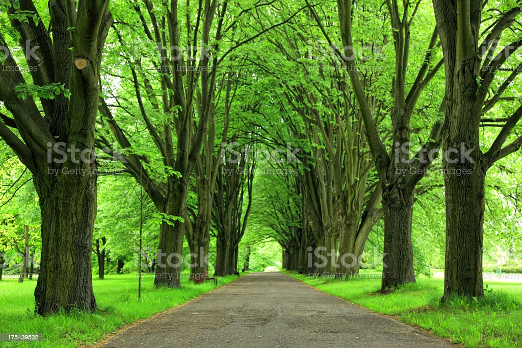 Walkway through park lined with trees stock photo