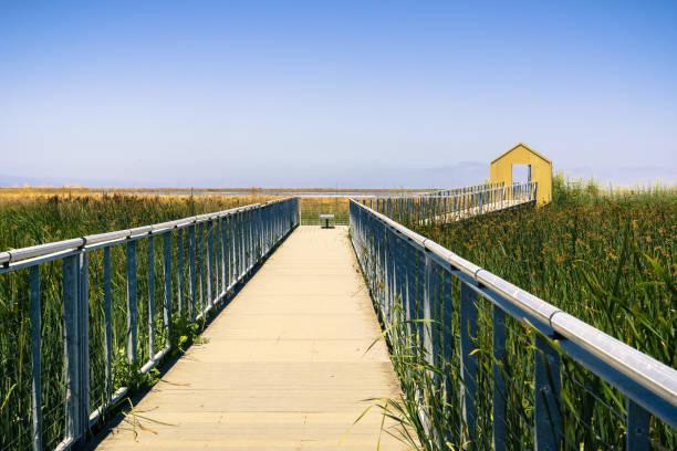 spazierweg durch den sumpf bei alviso marina county park, san jose, kalifornien - süd kalifornien stock-fotos und bilder