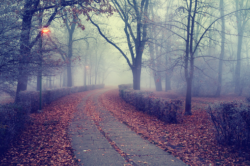 Walkway through the misty park in autumn.