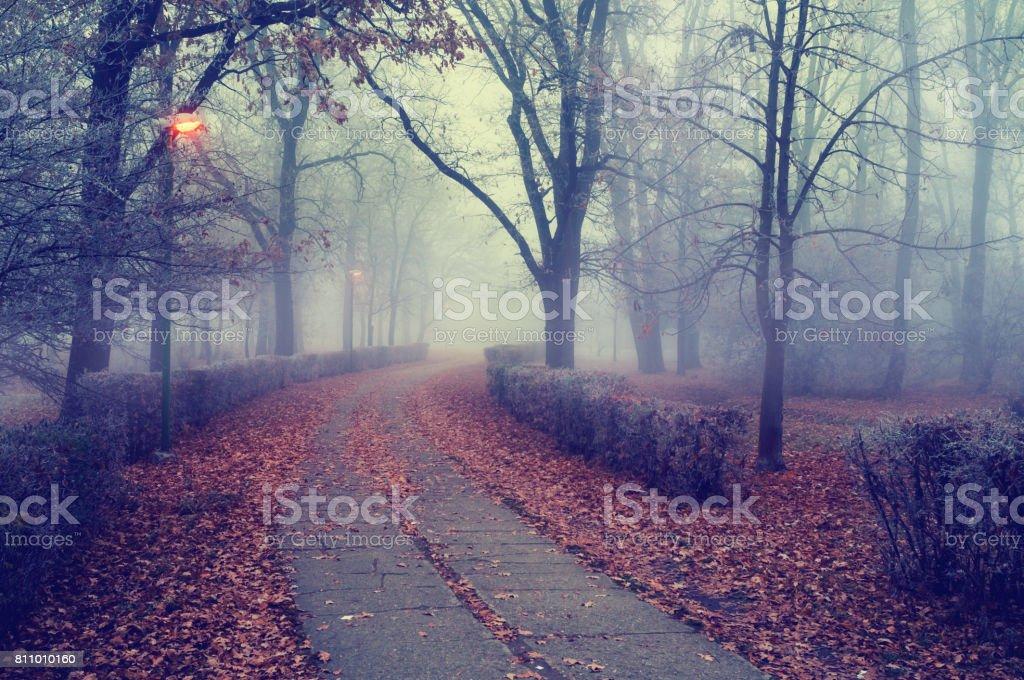 Passagem pelo parque neblina no outono. - foto de acervo